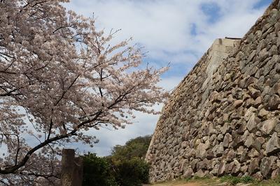 桜と御三階櫓石垣