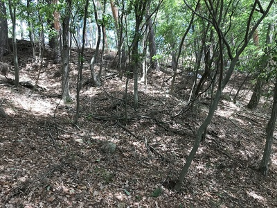 林小城畝状竪堀