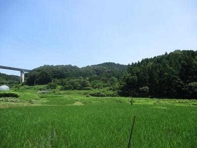 遠景(南西から)