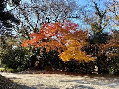 吉田城② 城址公園の紅葉