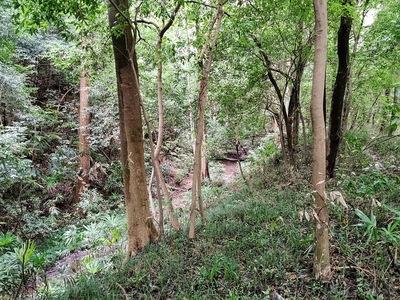 堀と土塁(中城と外城の間)