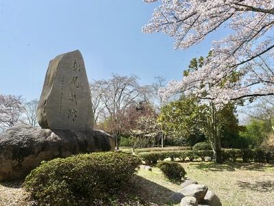 桜と松尾城石碑