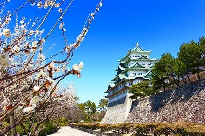 名古屋城 梅と天守閣2