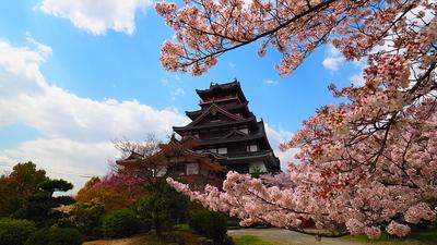 春満開 桃山城