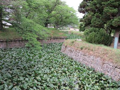 稜堡式石垣と水堀(大手門から)