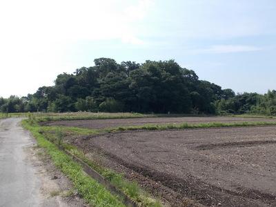 金井城遠景
