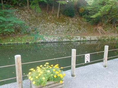 石垣と大手堀と黄色いお花さん