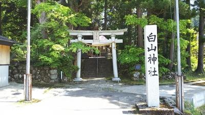 虫川の大杉がある白山神社
