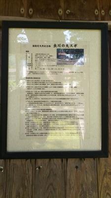 虫川の大杉(国指定天然記念物)の保護事業の実施状況