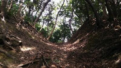 二の木戸跡にある竪堀を下から見る