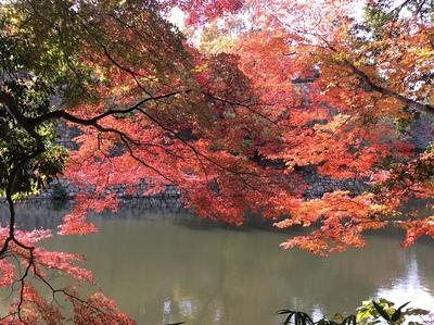明石城 紅葉越しの桜堀と石垣