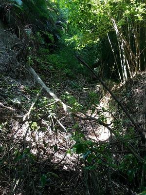 旧本丸 松尾城 登山道に木が倒れて攻城不可