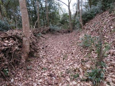 土塁と横堀(主郭の南側下)