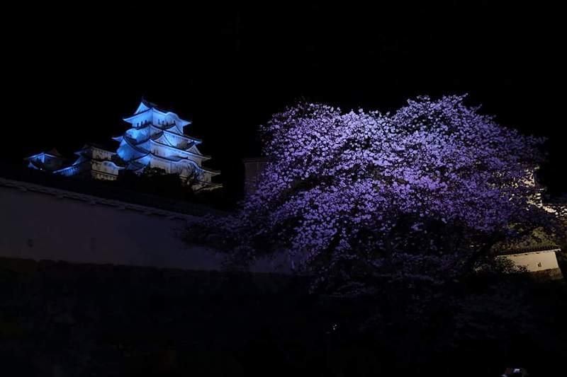 天守、夜桜会