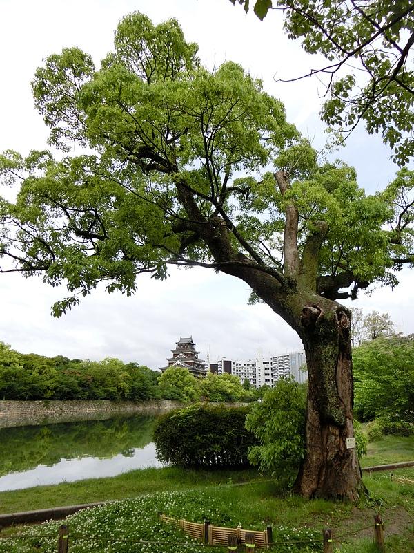 被爆した楠と広島城