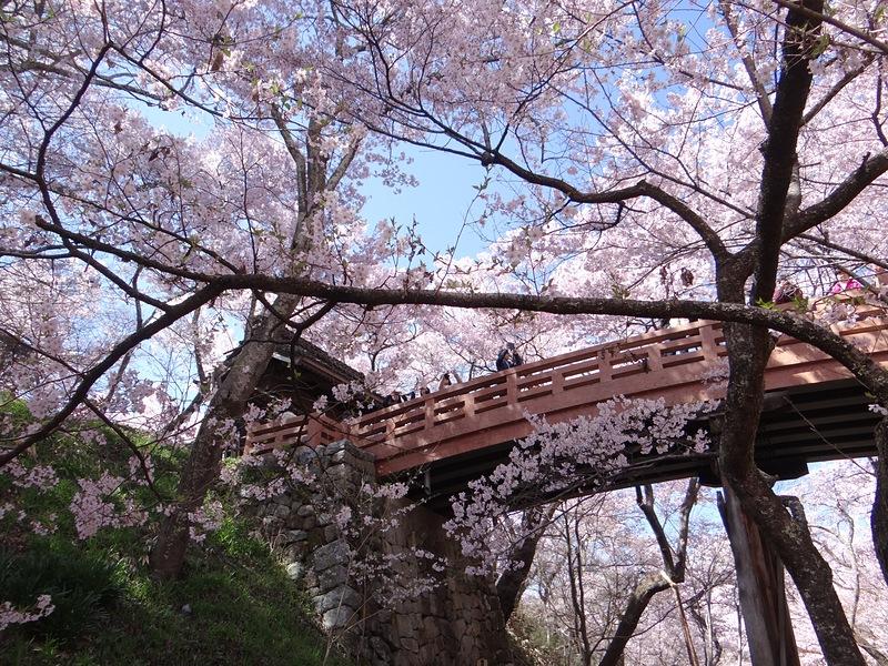 春の桜雲橋[高遠城]