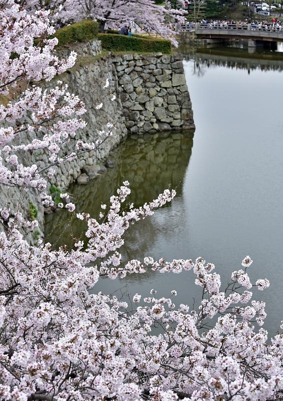 桜・石垣そして堀