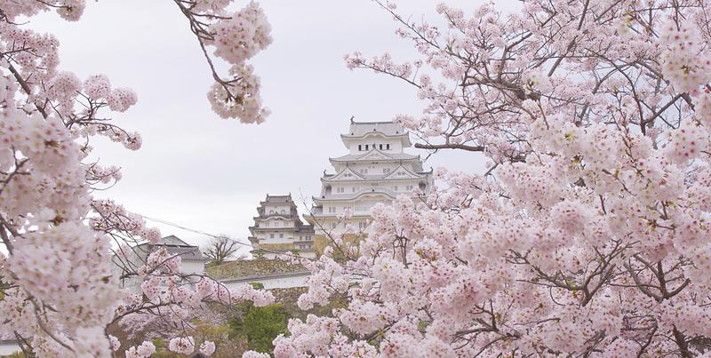 桜の石垣に立つ白鷺