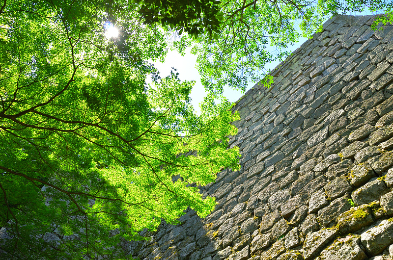 木陰で見上げる高石垣[丸亀城]