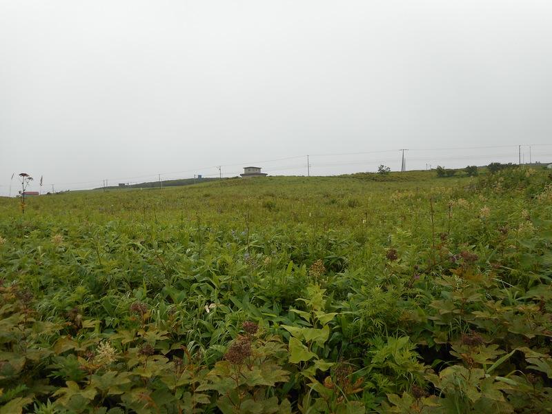 チャシから道路までの景色