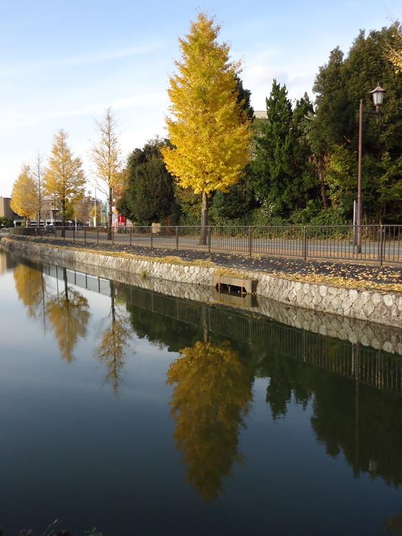 秋の水城公園