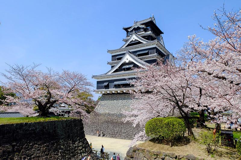 熊本城と桜(2015年)