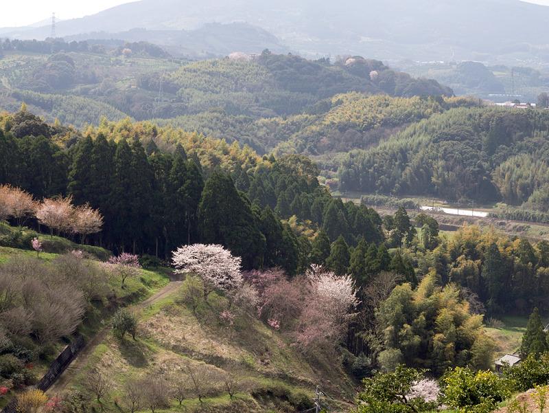 桜の時期の田原坂公園