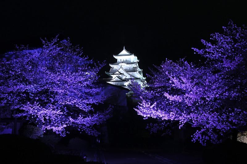 大天守と夜桜