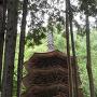 安楽寺(新緑)[提供:上田市商工観光部観光課]