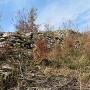 東曲輪跡の石垣