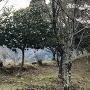 本郭の土塁