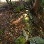 蔵屋敷跡石垣