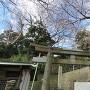 3分咲の桜と和田義盛碑