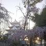 天守と枝垂れ桜