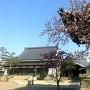 永弘院、ちょっとだけ咲いた桜