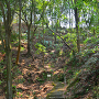 木漏れ日の中、本丸まで約200m地点