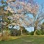 天守跡と桜