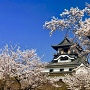 犬山城の桜 2018