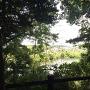 自然観察の森から北側の古利根沼を望む