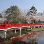 八ツ橋と桜