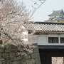 桜と岡口門と天守