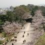 桜の岡口門方面