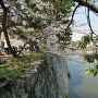 桜と堀と石垣