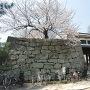 桜の岡口門