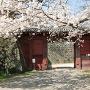 桜と追廻門