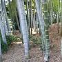 興禅寺土塁跡