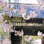ハート形した桜の枝と名島門