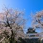 潮見櫓と桜並木