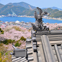 妙見山公園の桜と、小鳴門海峡
