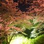 ライトアップされた桜と石垣